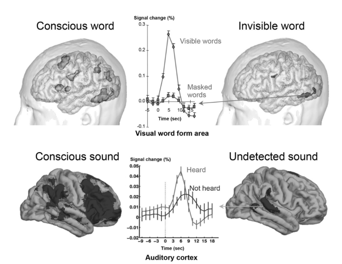 dahaene palavra consciente e inconsciente